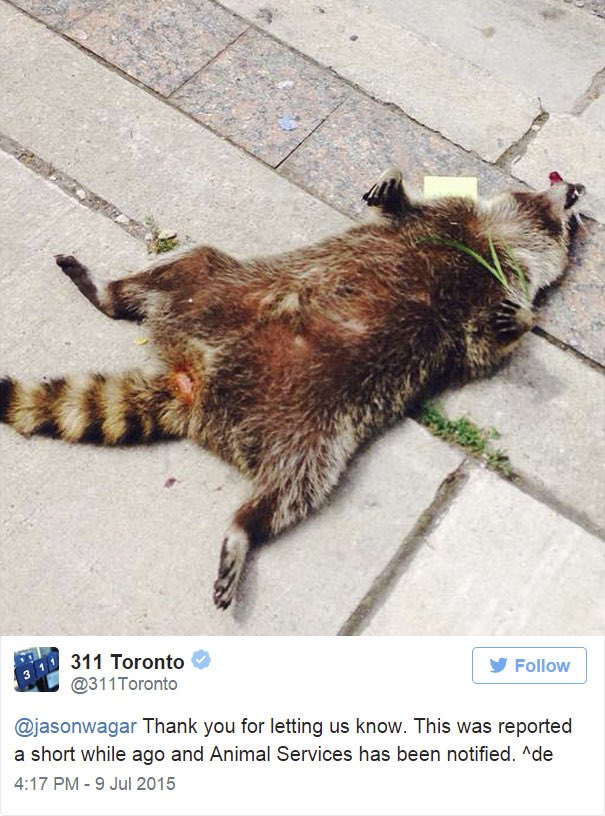 #DeadRaccoonTO Mullbrand Marketing Digital y Publicidad 002