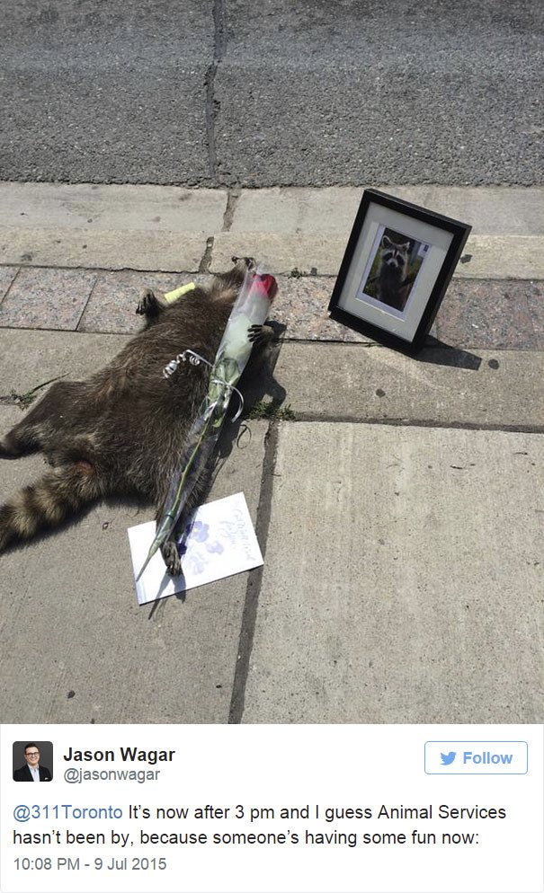 #DeadRaccoonTO Mullbrand Marketing Digital y Publicidad 004