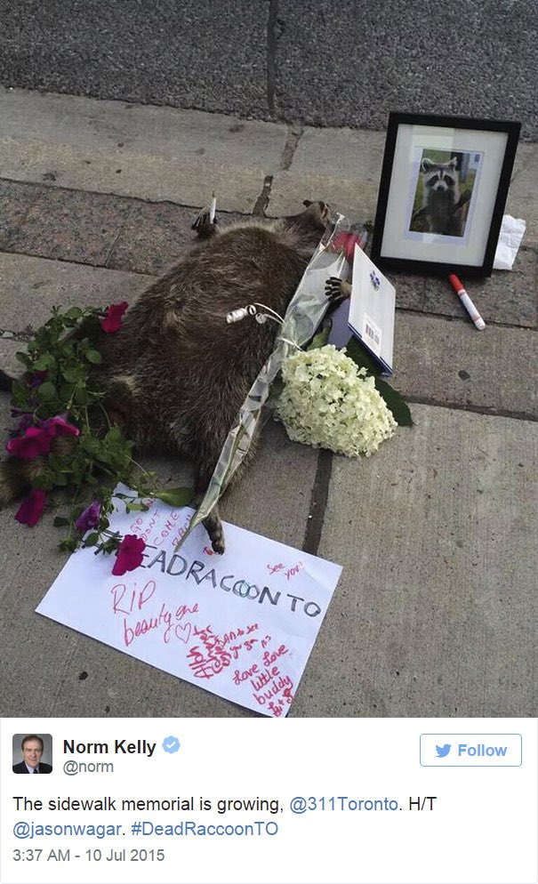 #DeadRaccoonTO Mullbrand Marketing Digital y Publicidad 008